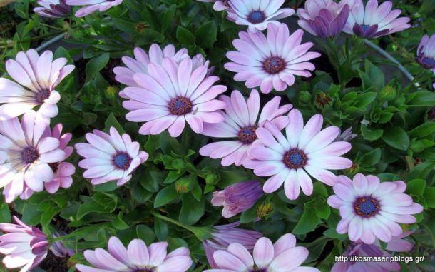 plants_flowers