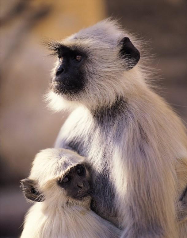 6d6c2-monkeymom