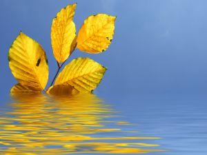 https://kosmaser.files.wordpress.com/2011/04/877605_beauty_of_autumn.jpg?w=300