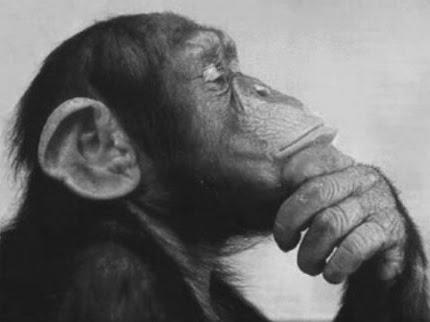 82c9a-monkey-thinking