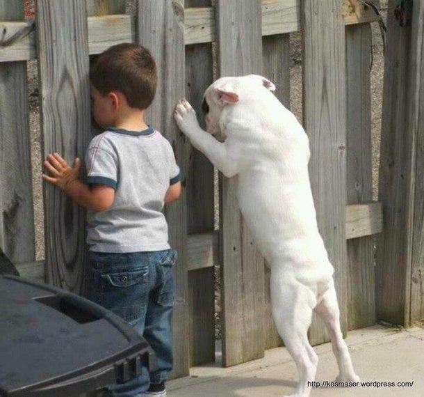 Scenes-touchantes-et-insolites-entre-animaux-et-humains1_018