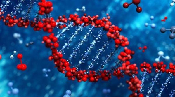 Οι σκέψεις και όχι τα γονίδια καθορίζουν την υγεία | Αλληλέγγυοι, όλα για τη Σκλήρυνση κατά Πλάκας